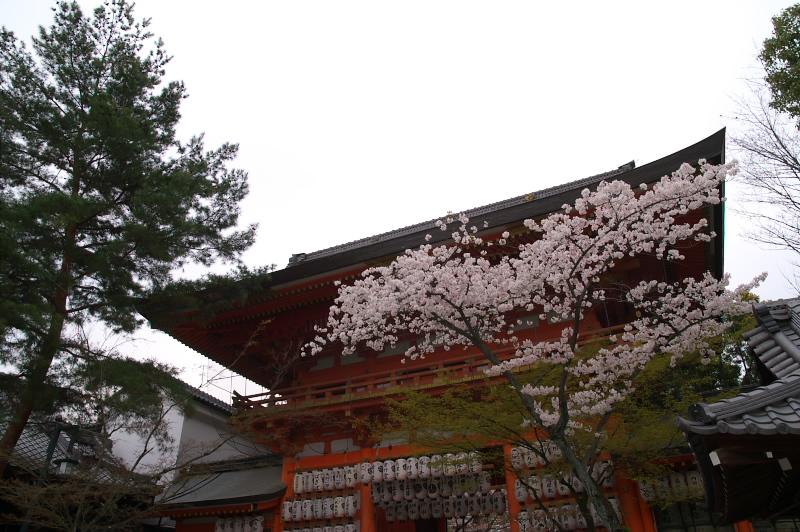 八坂神社の桜