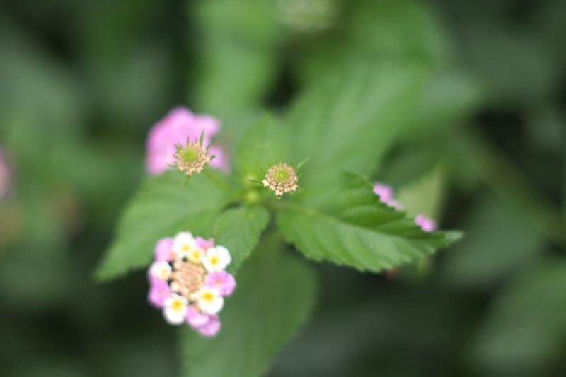 ボケボケな花