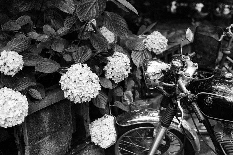 バイクとアジサイ