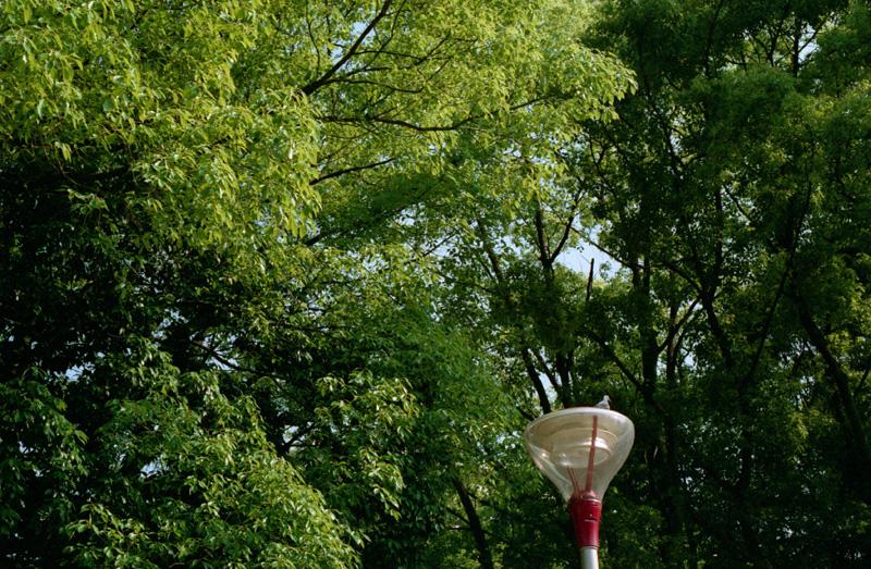 外灯と鳩と緑の葉っぱ