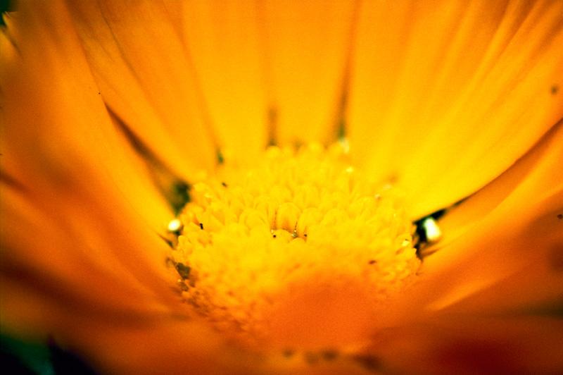 クロスでオレンジの花
