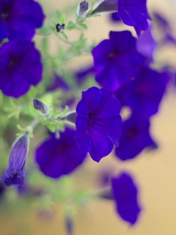 せめて花を