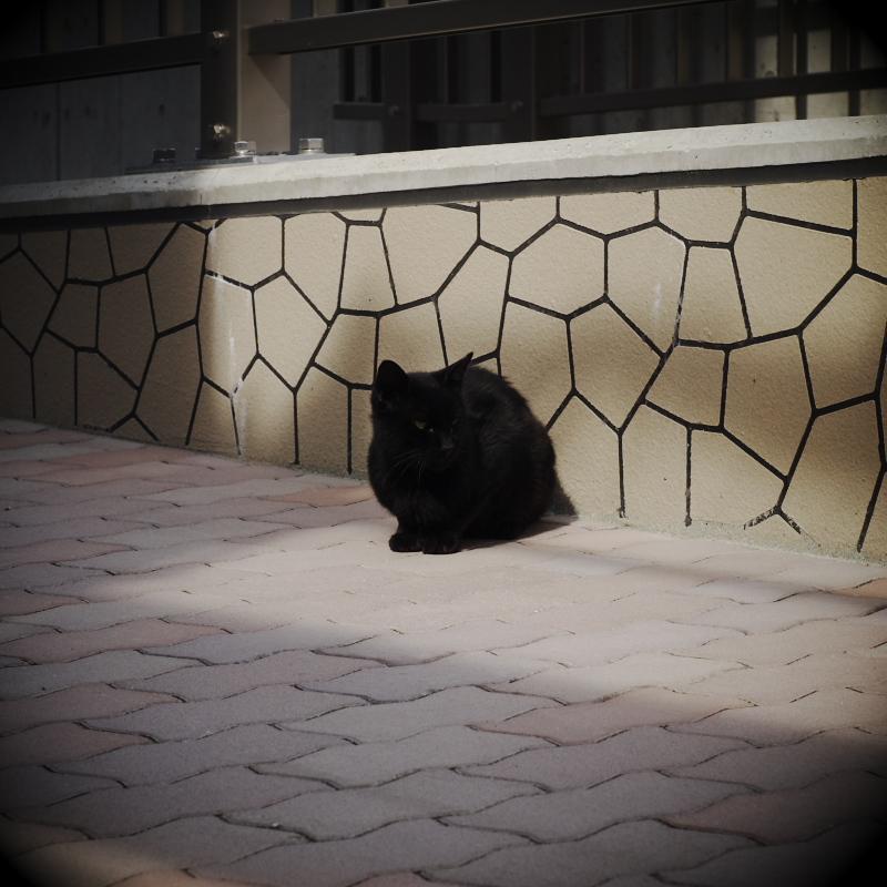 黒いニャンコ