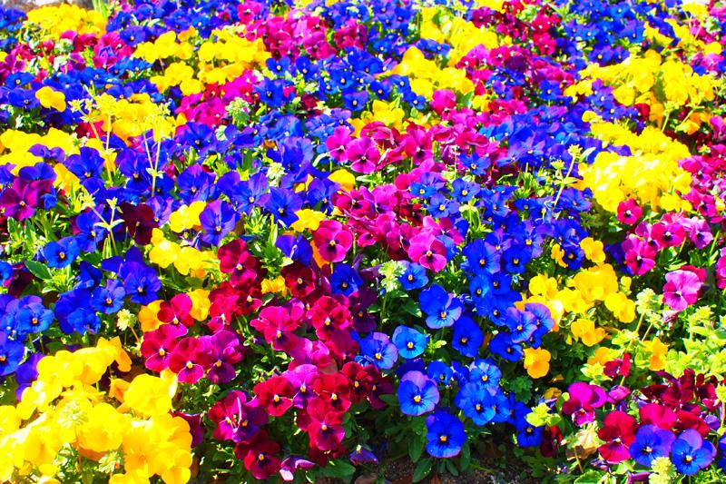 ポップアートな花