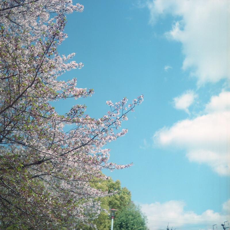 終わりの桜