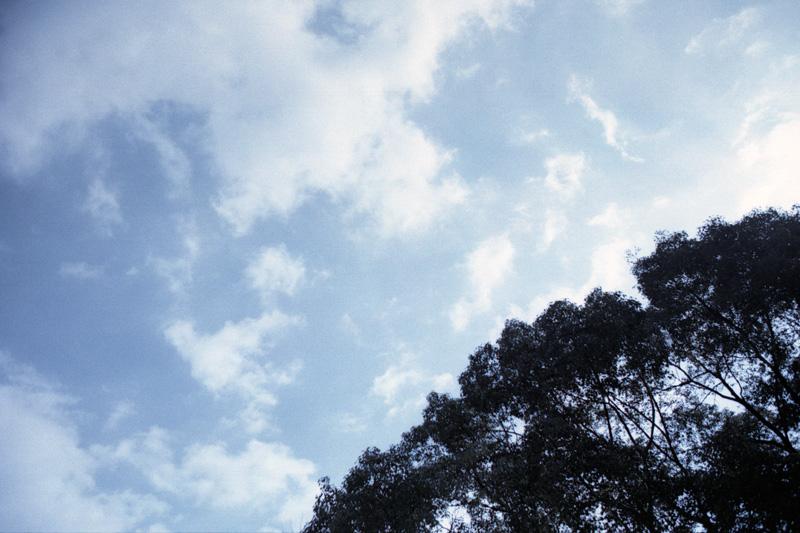 銀残しで空と樹