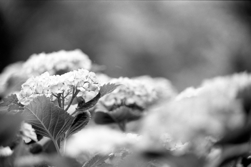Tone of Flowers