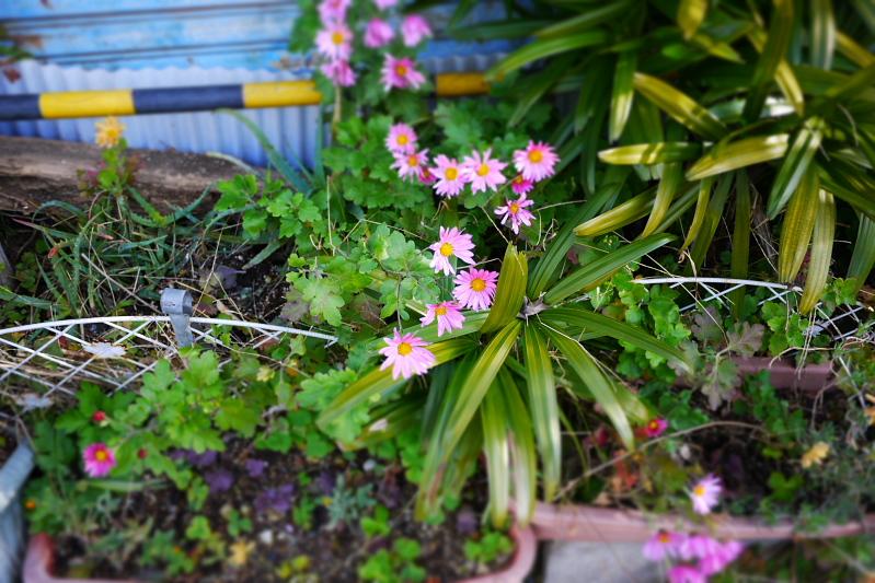 道端に咲いた花